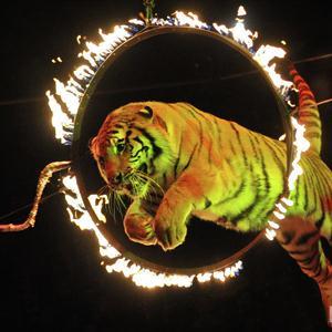 Цирки Краснознаменска