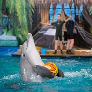 Дельфинарии, океанариумы Краснознаменска
