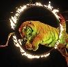 Цирки в Краснознаменске