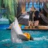 Дельфинарии, океанариумы в Краснознаменске